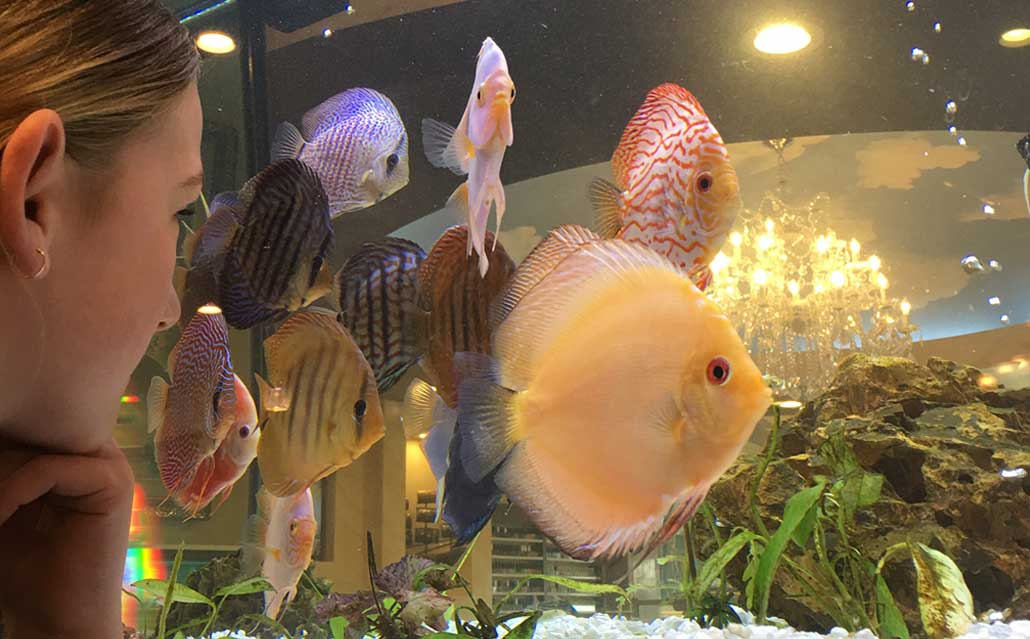 Bert's Pet Center Display